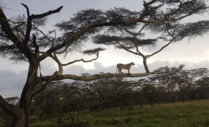 Mount Kenyahoney mooners