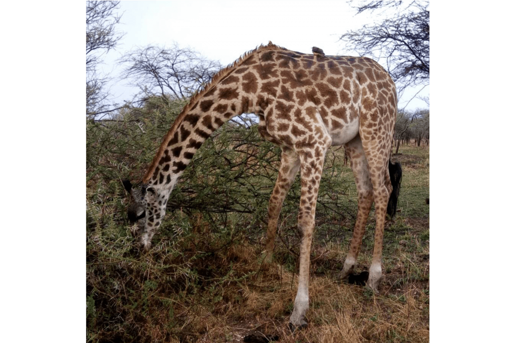 Day Trip Mount Longonot Great Rift Valley